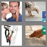 cheats-4-pics-1-word-4-letters-peck-6853062