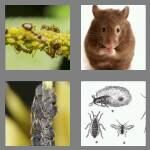 cheats-4-pics-1-word-4-letters-pest-9669045