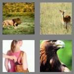 cheats-4-pics-1-word-4-letters-prey-5205960