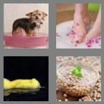 cheats-4-pics-1-word-4-letters-soak-6360702