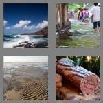 cheats-4-pics-1-word-4-letters-tide-2086348