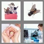cheats-4-pics-1-word-4-letters-tiny-7593424