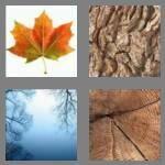 cheats-4-pics-1-word-4-letters-tree-8662062
