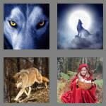cheats-4-pics-1-word-4-letters-wolf-6894671