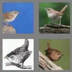 cheats-4-pics-1-word-4-letters-wren-1708473