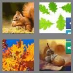 cheats-4-pics-1-word-5-letters-acorn-7164146