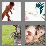 cheats-4-pics-1-word-5-letters-birth-8201694