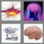 cheats-4-pics-1-word-5-letters-brain-9052775