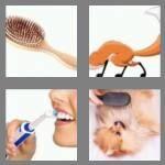 cheats-4-pics-1-word-5-letters-brush-7671169