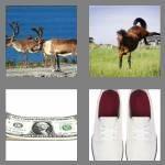 cheats-4-pics-1-word-5-letters-bucks-5800916
