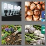 cheats-4-pics-1-word-5-letters-bulbs-9227240