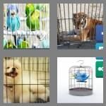 cheats-4-pics-1-word-5-letters-caged-1280627