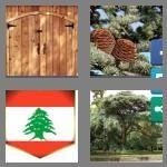 cheats-4-pics-1-word-5-letters-cedar-7309710