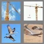 cheats-4-pics-1-word-5-letters-crane-4174190