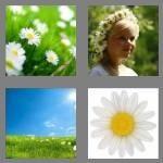cheats-4-pics-1-word-5-letters-daisy-7840837