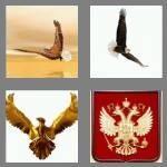 cheats-4-pics-1-word-5-letters-eagle-8768852