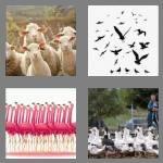 cheats-4-pics-1-word-5-letters-flock-2096237