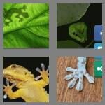 cheats-4-pics-1-word-5-letters-gecko-2259385