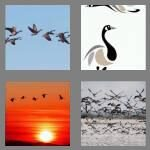 cheats-4-pics-1-word-5-letters-geese-3822468