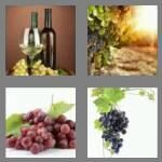 cheats-4-pics-1-word-5-letters-grape-2155399