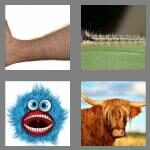 cheats-4-pics-1-word-5-letters-hairy-7252885