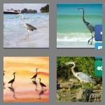 cheats-4-pics-1-word-5-letters-heron-9892756