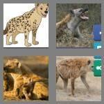 cheats-4-pics-1-word-5-letters-hyena-2222800