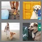 cheats-4-pics-1-word-5-letters-leash-5761085