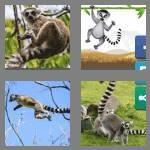 cheats-4-pics-1-word-5-letters-lemur-1477850