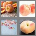 cheats-4-pics-1-word-5-letters-peach-7565835