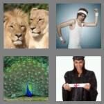 cheats-4-pics-1-word-5-letters-pride-4659998