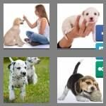 cheats-4-pics-1-word-5-letters-puppy-6764057