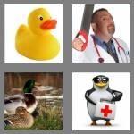 cheats-4-pics-1-word-5-letters-quack-3894529