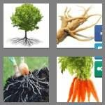 cheats-4-pics-1-word-5-letters-roots-5942307