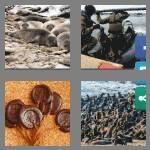 cheats-4-pics-1-word-5-letters-seals-9169425