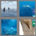 cheats-4-pics-1-word-5-letters-shark-7491939