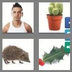 cheats-4-pics-1-word-5-letters-spiky-6550778