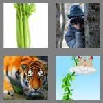 cheats-4-pics-1-word-5-letters-stalk-4356846