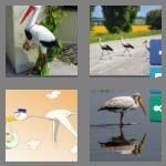 cheats-4-pics-1-word-5-letters-stork-8986944