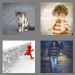 cheats-4-pics-1-word-5-letters-stray-4581065