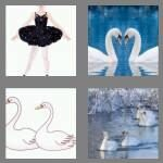 cheats-4-pics-1-word-5-letters-swans-1520426