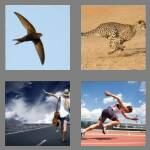 cheats-4-pics-1-word-5-letters-swift-7406953