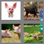 cheats-4-pics-1-word-5-letters-swine-4652226