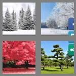 cheats-4-pics-1-word-5-letters-trees-8756672