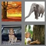 cheats-4-pics-1-word-5-letters-trunk-1255143