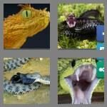 cheats-4-pics-1-word-5-letters-viper-6372114