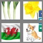 cheats-4-pics-1-word-5-letters-welsh-4392032
