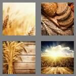 cheats-4-pics-1-word-5-letters-wheat-2201553