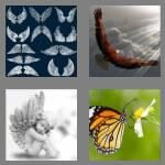 cheats-4-pics-1-word-5-letters-wings-6775428
