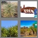 cheats-4-pics-1-word-5-letters-yucca-2850013